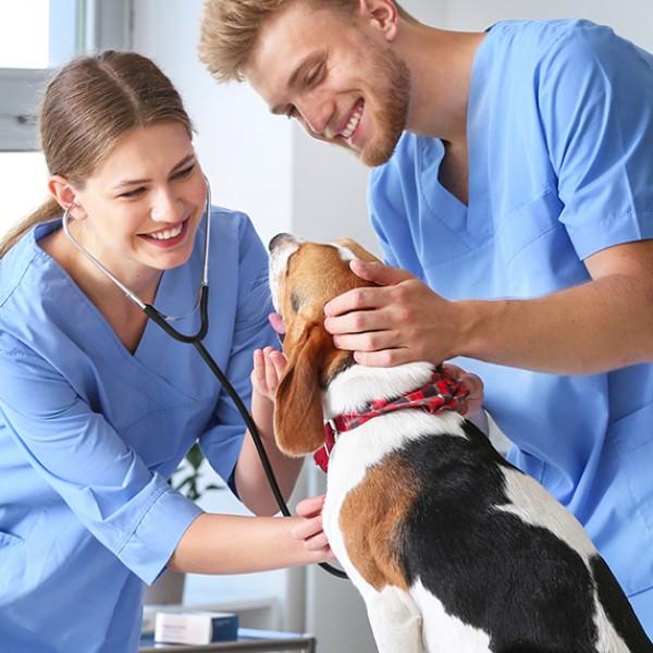 auxiliar veterinario